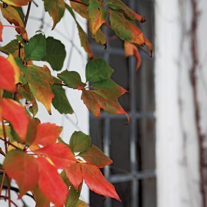 lead-paned window