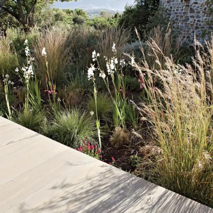 indigenous garden